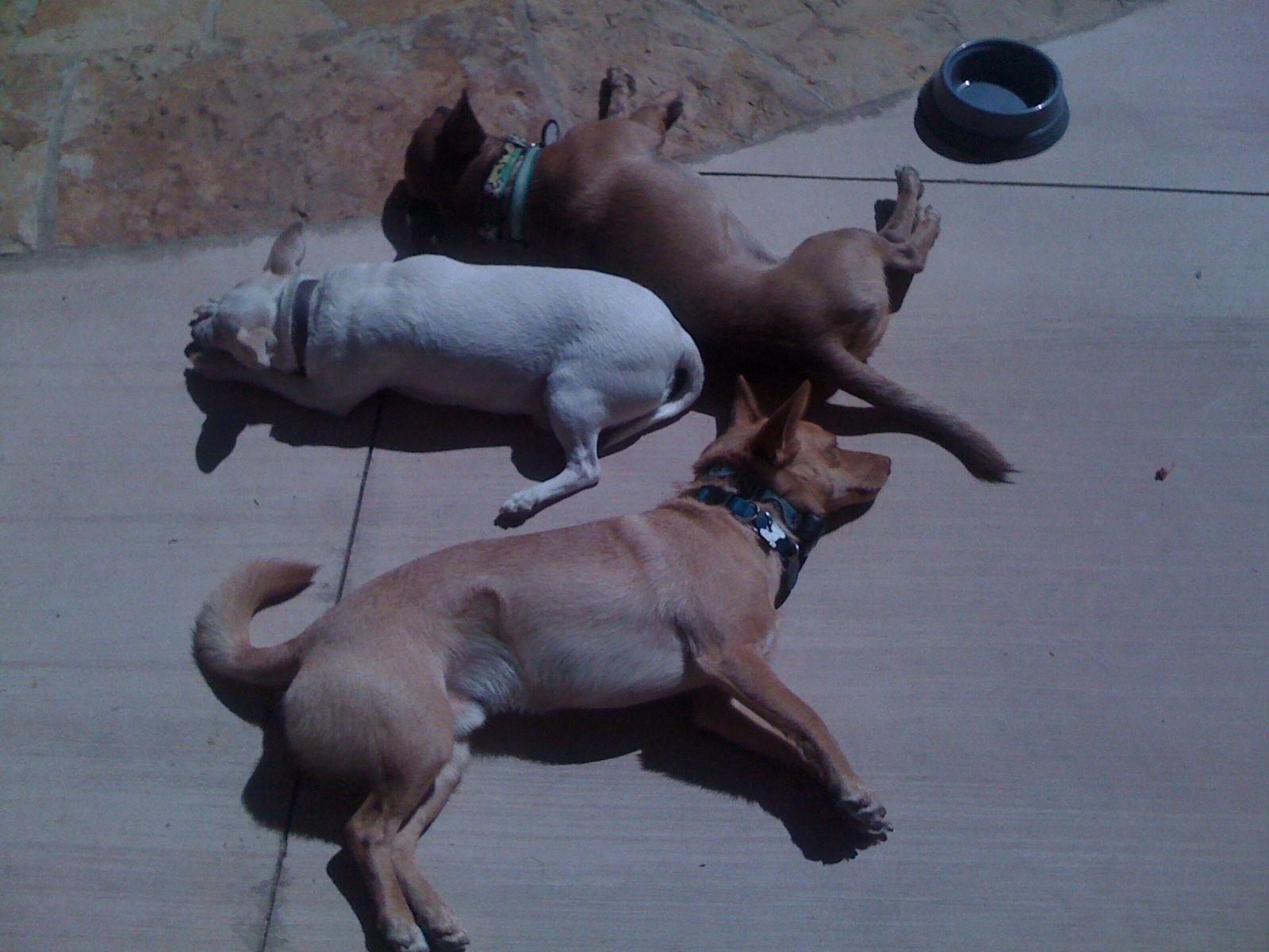 dogs sunning