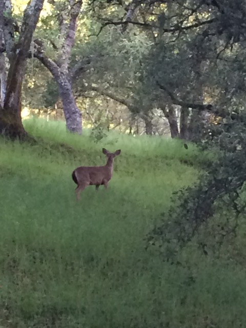 A deer at Rancho from a few years ago. I thought it appropriate to the idea of freedom and letting go.